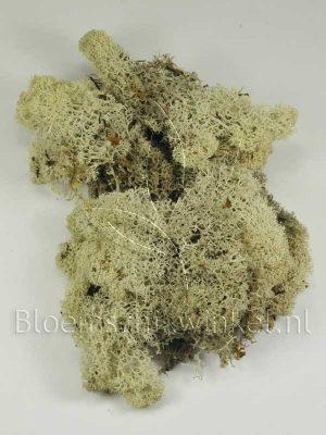 Materialen voor bloemschikken, ijslandsmos ook vaak rendiermos genoemd
