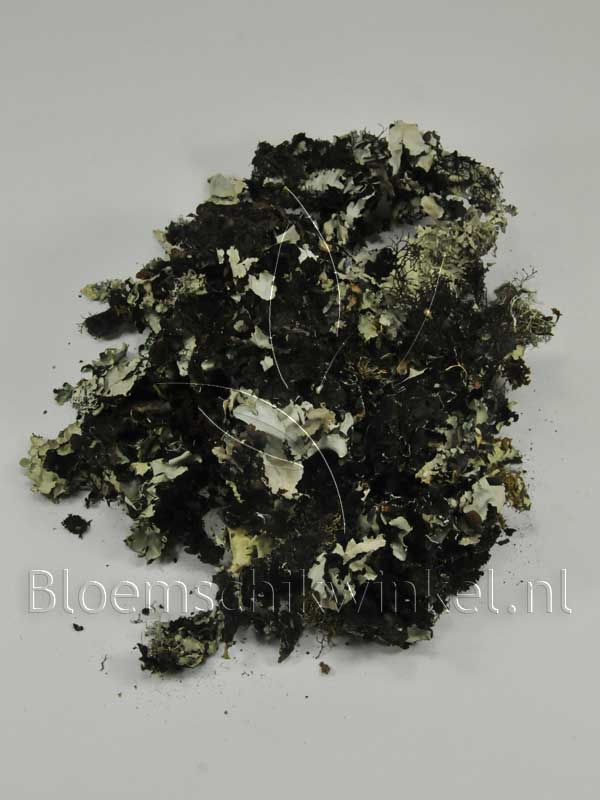 Materialen voor bloemschikken, korstmos
