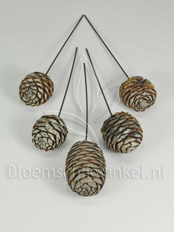 Materialen voor bloemschikken, leucadendron murri