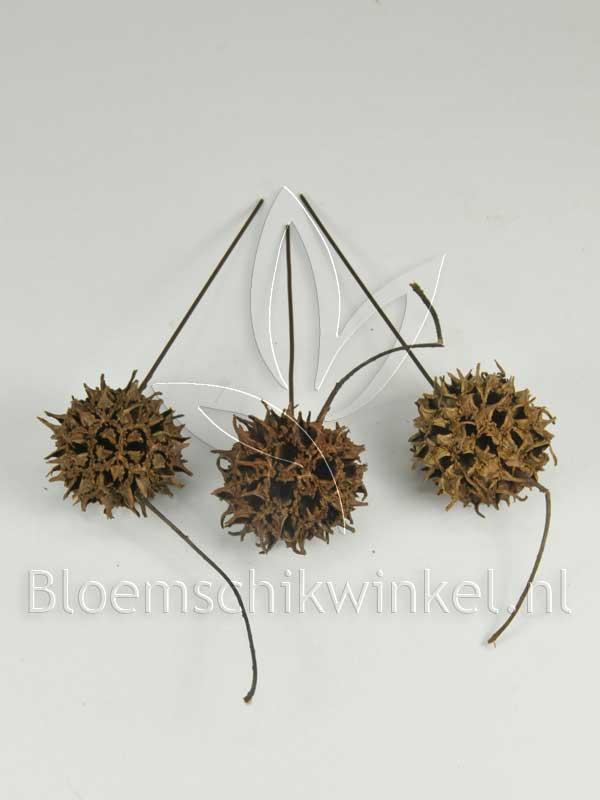 Materialen voor bloemschikken, amberbaum