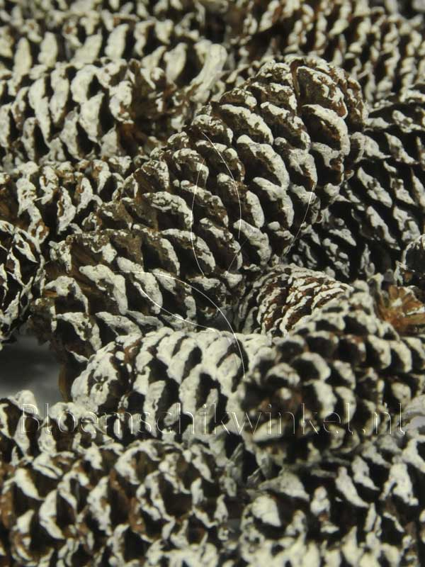 Materialen voor bloemschikken, birch pine frosted close-up