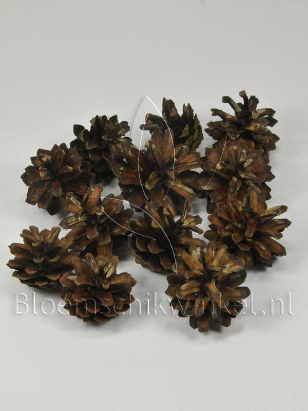 Decoratiemateriaal: Dennenappels sylvester (silvester)