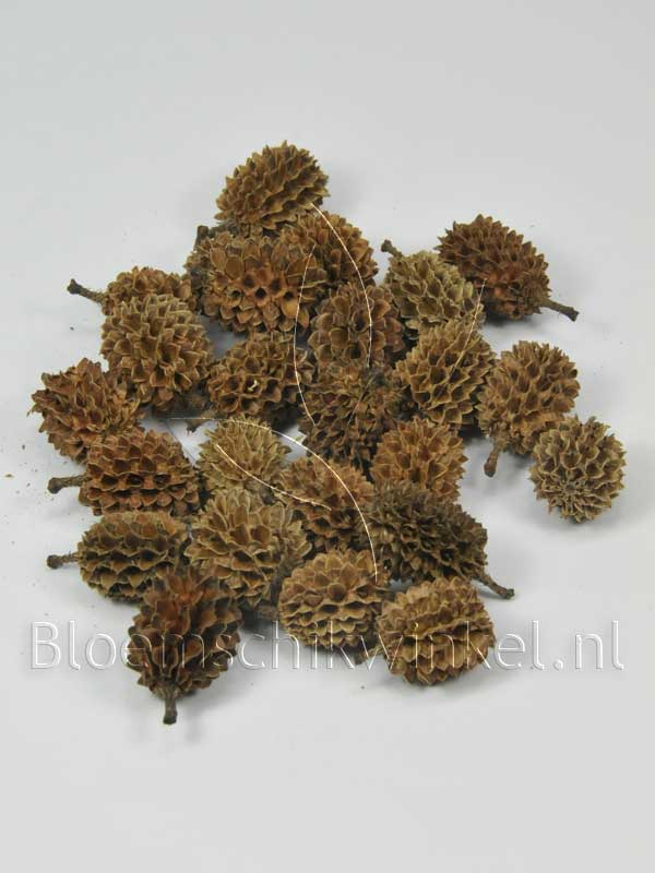 Materialen voor bloemschikken, casuarinakoppen naturel