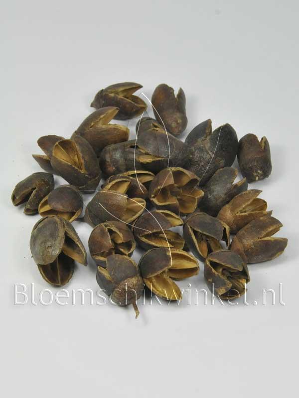 Materialen voor bloemschikken, baculi,