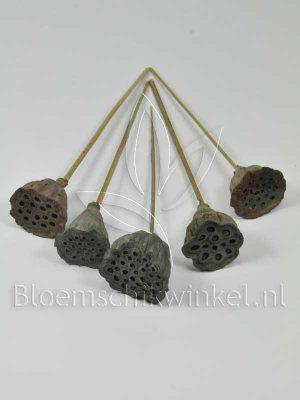 Materialen voor bloemschikken, lotus-mini
