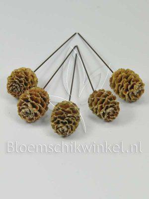 Materialen voor bloemschikken, leucadendron sabulosum