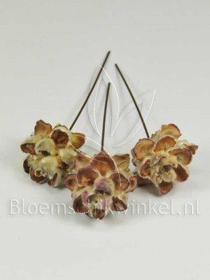 Materialen voor bloemschikken, leucadendron pubescens