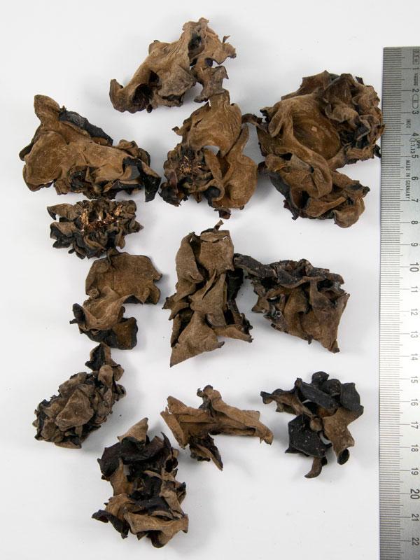 Gedroogde groene paddenstoelen