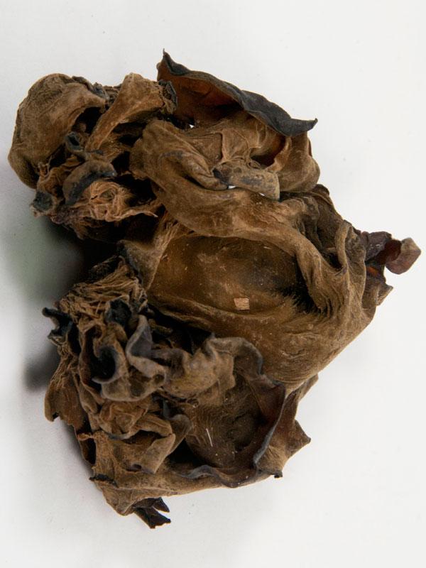gedroogde groene paddenstoel, close up