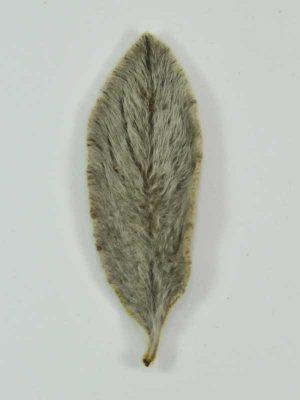 bloemschikmateriaal. bruin stachysblad gedroogd