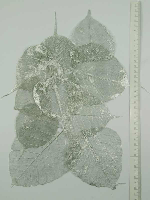 Skeletblaadjes zilver 10 stuks