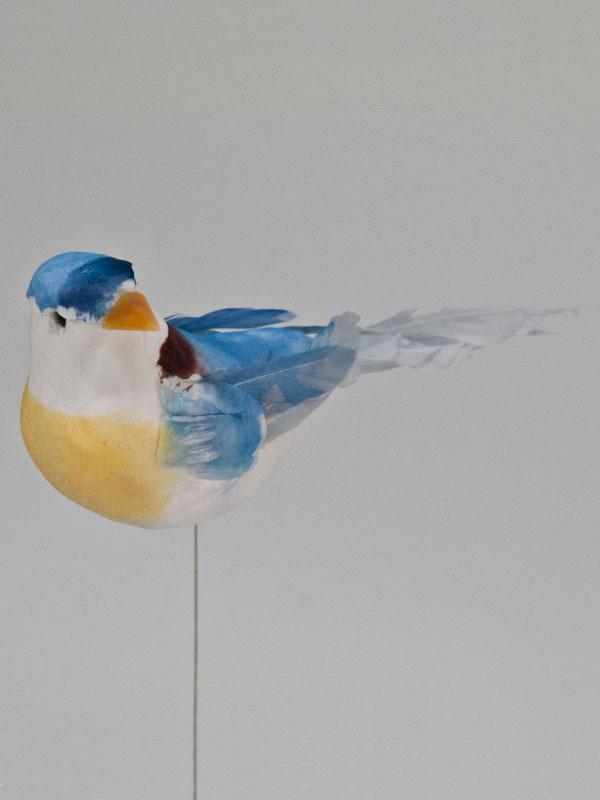 vogeltje op draad blauw