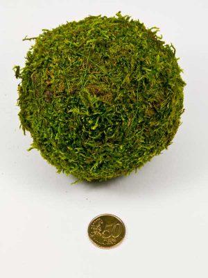 hoe groot is de bol van lappenmos, vergeleken met 50 ct