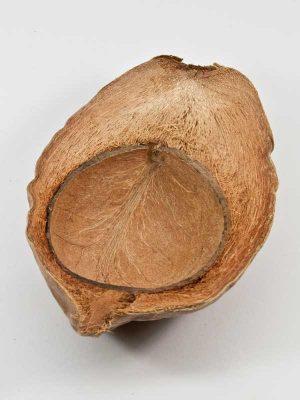 coco nut half
