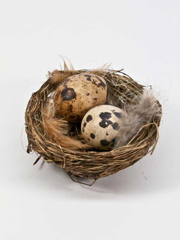 nestje met twee eitjes