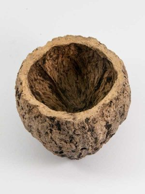 kokosnoot ourico