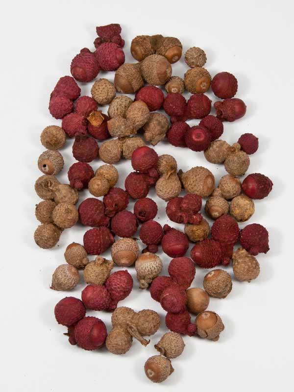 acorn balletjes