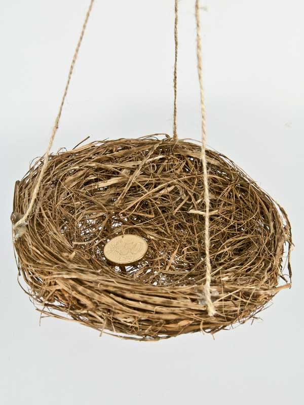 Vogelnestje grootte vergeleken met 50 ct muntstuk