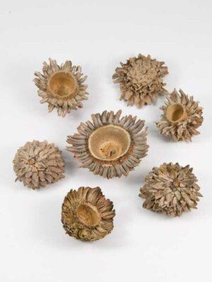 acorn cones voor decoratie