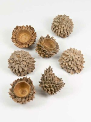 acorn cones decoratie