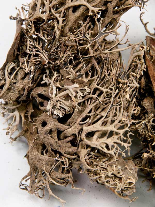 de grillige structuur van boommos